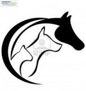 mariachi valencia edo carabobo 04144149532 caballo real