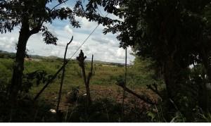se vende terreno  en tinaquillo - cojedes 50.000.000 bs